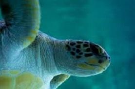 Aquarium biarritz 277 184